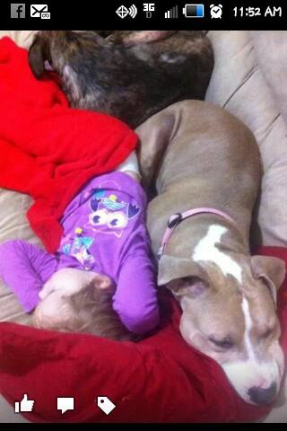 3 year old American Pitbull Terrier unaltered and utd on shots, great with kids, and other dogs just NO CATS, needs a ne...