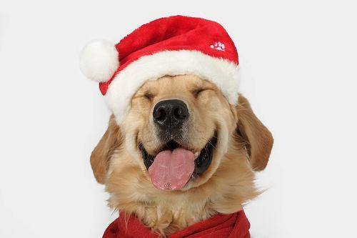 We would like to wish everyone a safe and Merry Christmas! We are open 9-5 on Christmas Eve.Closed on Christmas Day.