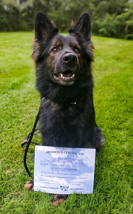 🐾 Ruby Von Schraderhaus BH 🐾 Ruby is in our sport dog program and has been working towards her BH title (obedience and t...