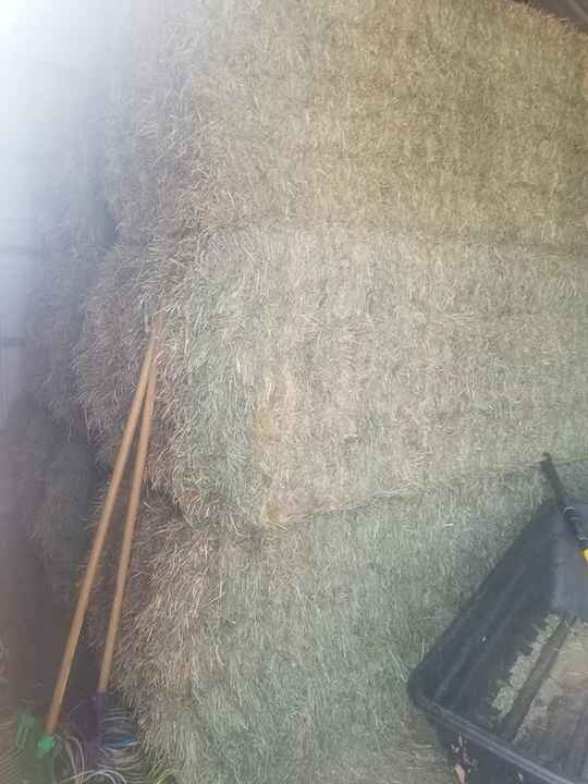 9 bales of 2020 Orchard weighing 900lbs. $120 each8 bales of 2020 North Park weighing around 700 lbs each. $115 eachBoth...
