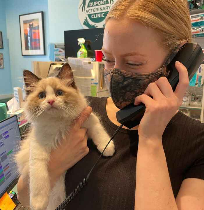 Meet Benjamin! 😻 We are so excited to have this little guy at the clinic today! #ragdollcat #ragdollkittens
