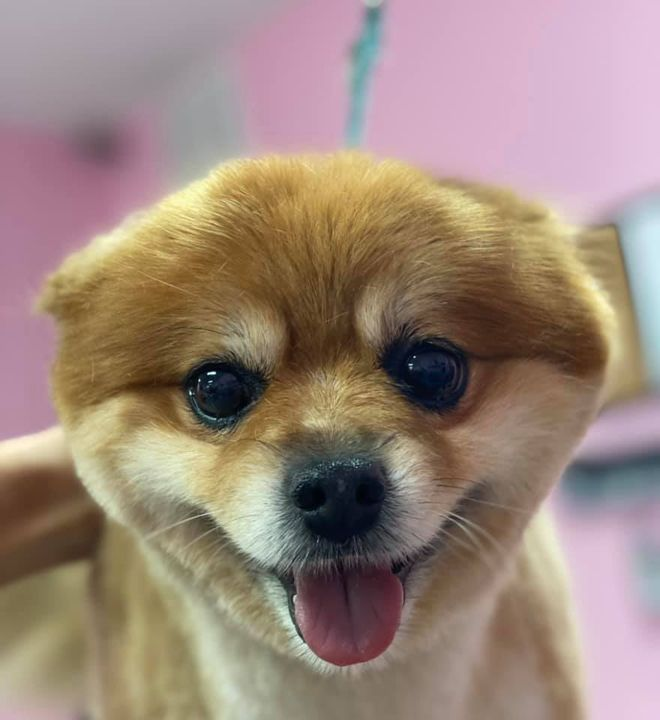 Hi, friends! Toby. Groomed by Courtney.