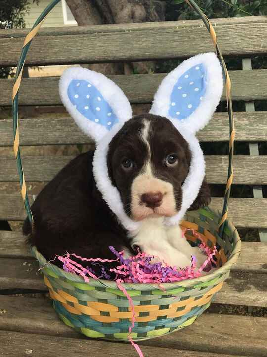 Happy Easter!  🌷🐰🐥⚘