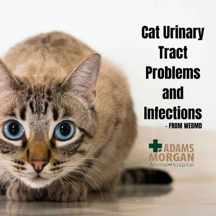 Whether it's a change in your cats normal litter box routine, or you notice pain or discomfort when they're doing their ...