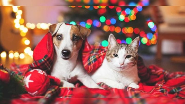 From all of us at Aboard the Ark, we wish you and your furry family members a joyous holiday and a happy New Year!