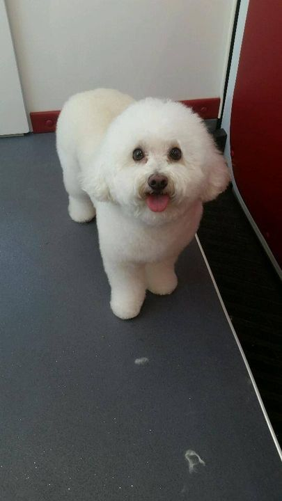 We use special products and techniques to get a white, fluffy, soft finished groom!