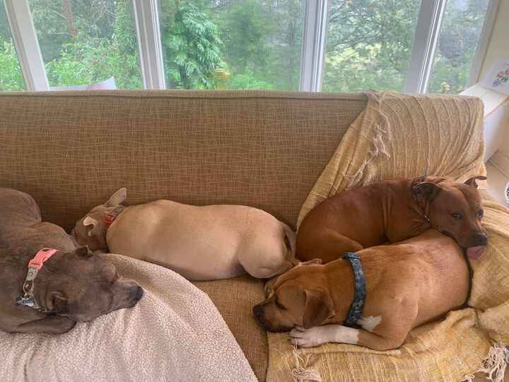 Lazy day here in the upcountry of Maui, as it's pouring rain for the 18,000th straight day. Think of building an ark wit...