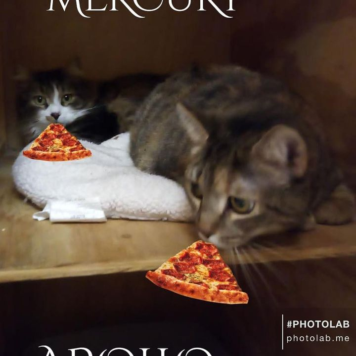 It's National Pizza Day 🐈